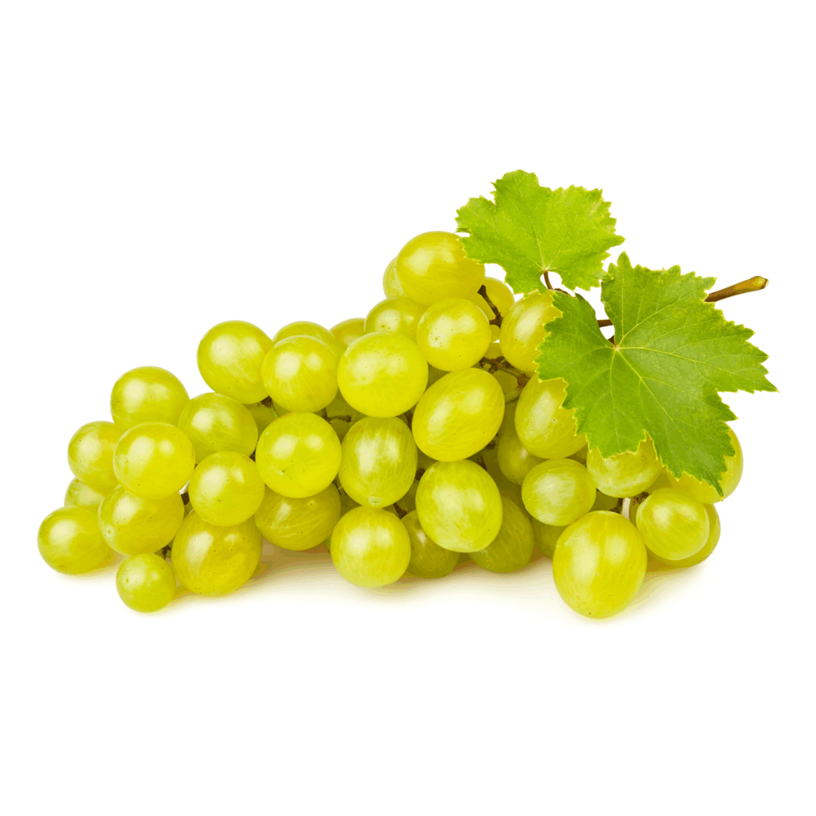 uvas - Thompsson 2